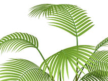 Tropical plant Stock Image