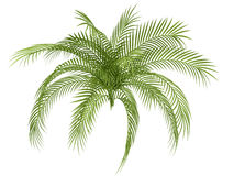 Tropical plant Royalty Free Stock Photos