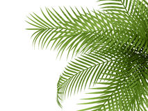 Tropical plant Stock Photos