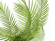 Tropical plant Stock Photo