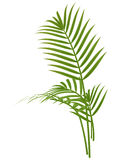 Tropical plant Stock Photography