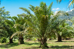 Tropical plant in garden Stock Image