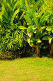 Tropical plant garden style Royalty Free Stock Photography