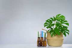 Tropical plant with green leaves and Candle holder made of glass. Bottle royalty free stock image