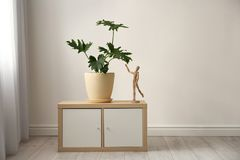 Tropical plant with green leaves and wooden human royalty free stock image
