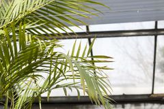 Palm branches. royalty free stock image