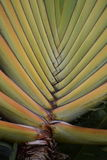Tropical plant Hawaii Royalty Free Stock Image