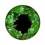 Tropical plant leaves circle shape with empty black center on white background. Tropical jungle plant leafs circle shape with empty black center isolated on stock image