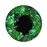 Tropical plant leafs circle shape with empty black center on white background. Tropical jungle plant leafs circle shape with empty black center isolated on white stock photos