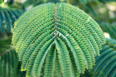 Tropical plant. Stock Images