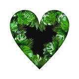 Tropical plant leaves heart shape with empty black center on white background. Tropical jungle plant leaves heart shape with empty black center isolated on white royalty free stock image