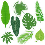 Tropical plant leaves vector collection Royalty Free Stock Photography