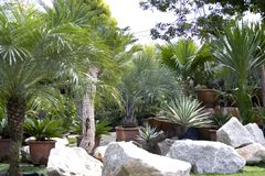 Tropical Plant Nursery Stock Images