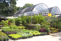 Tropical Plant Nursery Stock Photography