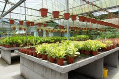Tropical plant nursery Royalty Free Stock Images