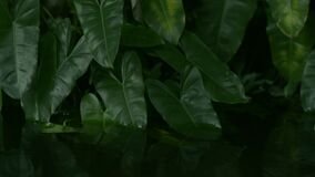 Tropical plant submerged in water and green leaves swaying by the wind.