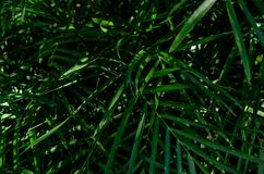 Tropical plant. Leafs background Stock Image