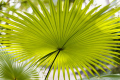 Tropical plant in the wild Royalty Free Stock Images