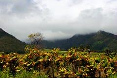 Tropical Plantation Hawaii Royalty Free Stock Images