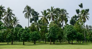 Tropical plantation on Java Island, Indonesia royalty free stock images