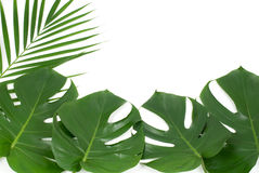 Tropical plants Stock Photos