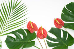 Free Tropical Plants Stock Images - 18827834