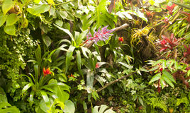 Tropical plants. Warm greenhouse planted with tropical plants Stock Photo