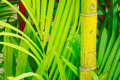 Tropical Plants Royalty Free Stock Images