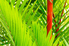 Tropical Plants Stock Photography