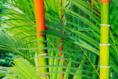 Tropical Plants Stock Image