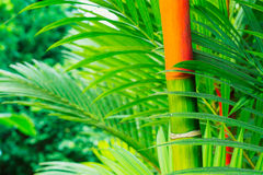 Tropical Plants Royalty Free Stock Image