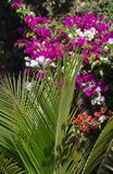 Tropical plants. Photo taken in west Africa Stock Photos