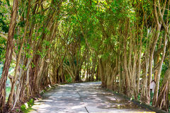 Tropical plants alley Royalty Free Stock Photography