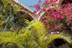 Tropical plants and arches Royalty Free Stock Photo