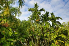 Tropical plants in the area of the hotel, beach and trees, Phra Ae Beach, Ko Lanta, Thailand Stock Photo