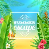Tropical Plants Background Royalty Free Stock Image