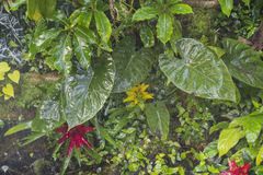 Tropical plants background Royalty Free Stock Photos