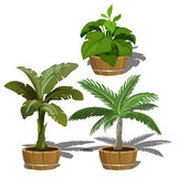 Tropical plants in buckets for office and home Royalty Free Stock Photography