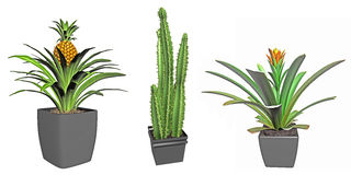Tropical plants and cactus Royalty Free Stock Images