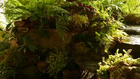 Tropical plants and cascade in beautiful garden. Various green tropical plants growing near small cascade with fresh. Water on sunny day in amazing garden stock video footage