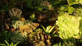 Tropical plants and cascade in beautiful garden. Various green tropical plants growing near small cascade with fresh. Water on sunny day in amazing garden stock video