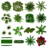 Tropical Plants Collection Top View Royalty Free Stock Photos