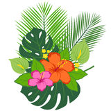 Tropical plants and flowers arrangement Royalty Free Stock Image