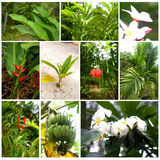 Tropical plants and flowers Royalty Free Stock Images