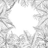 Tropical Plants Frame. Hand drawn branches and leaves of tropical plants. Monochrome square floral frame. Dieffenbachia, ficus, fern, palm fronds sketch. Black Royalty Free Stock Photos