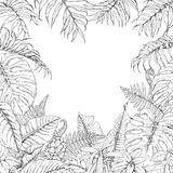 Tropical Plants Frame. Hand drawn branches and leaves of tropical plants. Monochrome square floral frame. Monstera, dieffenbachia, fern, palm fronds sketch Royalty Free Stock Photo