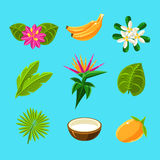 Tropical Plants And Fruits Collection Stock Photos
