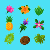Tropical Plants And Fruits Set. In Simple Realistic Cartoon Flat Vector Design  On Blue Background Royalty Free Stock Photos