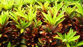 Tropical plants. In the garden stock video footage