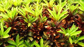 Tropical plants. In the garden stock footage